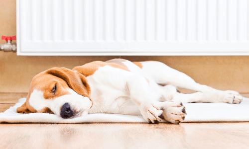 Bonfe Heating Services - Customer Reviews & Testimonials