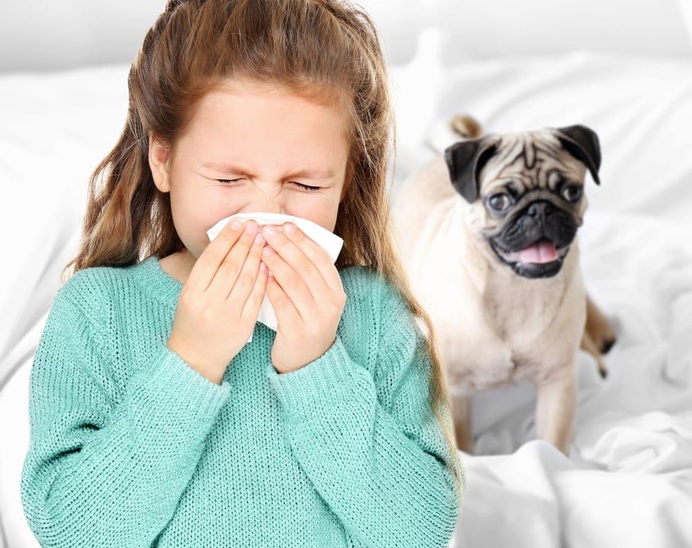 common indoor allergy triggers in spring